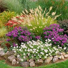 22 best ornamental grasses in the garden images on