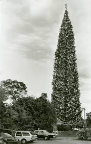 the world u0027s largest decorated christmas tree u0027 historic palm beach