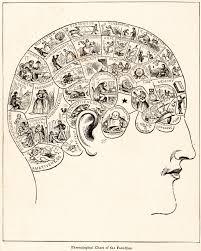 phrenology wikipedia