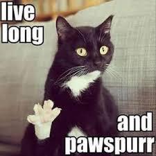 Grumpy Cat Birthday Memes - 80 top funny happy birthday memes