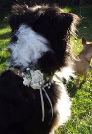 blumen fã r hochzeit 11 best dogs in weddings images on wedding dogs