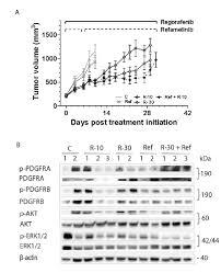 regorafenib antitumor activity upon mono and combination therapy