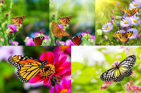 pictures of butterflies and flowers flower and butterfly images