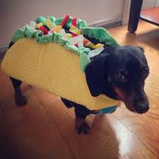 Halloween Costumes Wiener Dogs 16 Dachshund Costumes Images Dachshunds