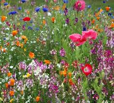 Pictures Of Gardens And Flowers Habitat Garden Ideas Full Sun Perennials Wildflowers And Woody
