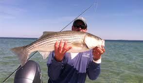 cape cod bay fishing report u2013 october 6 2016 u2013 salty cape