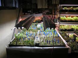 Indoor Rock Garden - indoor propagation forum topic north american rock garden society