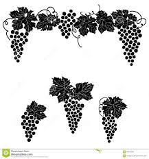 vine grape ornament element decor set stock illustration image