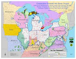 emerald ash borer map the emerald ash borer an invasive insect department of