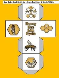bee life cycle for kids cycle