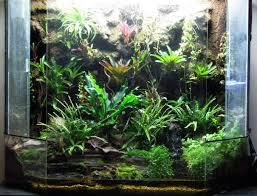 83 best terrariums u0026 vivariums images on pinterest poison dart