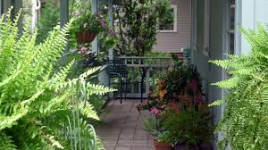 Plants For Pergolas by The 9 Best Potted Plants To Decorate Your Pergola