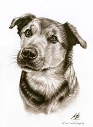 how to draw a dog free graphite pencil art lesson doggone good
