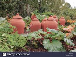 terracotta rhubarb forcing pots in the fruit and vegetable garden