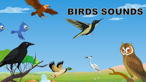 sounds of birds birds sounds in the morning for babies