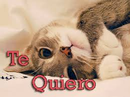 imagenes de gatitos sin frases imágenes con frases bonitas de gatos para decir te extraño te amo
