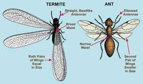 Winged Termites In Bathroom 10 Ways To Get Rid Of Flying Ants In House Enkiverywell