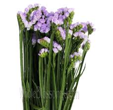 statice flowers tissue culture wholesale statice flower lilac for wedding