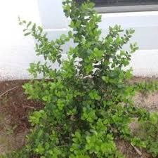 Melbourne Fl Native Plant Nursery