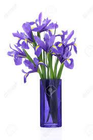 Flowers Glass Vase Iris Flower Arrangement In A Blue Glass Vase Isolated Over White