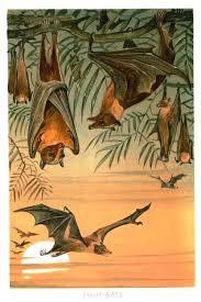 vintage halloween illustrations vintage bat illustration other animal artworks pinterest