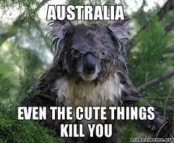 Australia Meme - australia even the cute things kill you make a meme