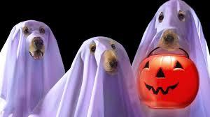 full hd wallpaper halloween dog ghost jack o u0027 lantern comic
