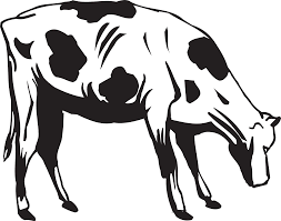 black and white drawing of a cow eating grass free image