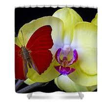Orchid Shower Curtain Orchid Flower Shower Curtains Fine Art America