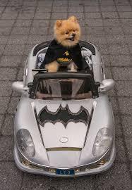 Disney Halloween Costumes Dogs 25 Animals Costumes Ideas Dogs