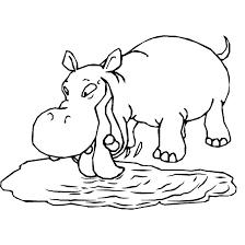 animal kingdom coloring book hippo calatorscop travels shelf