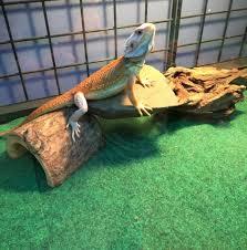 Seeking Lizard Simple Update Reptile Cage Options Still Seeking Perfection Ideas