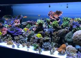 led reef lighting reviews led aquarium led aquarium lighting reviews 2012 aokpharm info