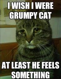 Grumpy Cat Meme Images - i wish i were grumpy cat meme cat planet cat planet