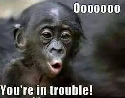 Funny Monkey Meme - monkey meme