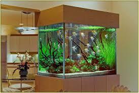 unique aquarium decorations home design ideas