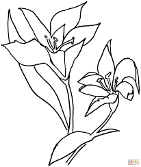 drawing of flower basket drawing of basket of flowers free