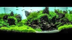 Substrate Aquascape Adu Aquascaping Viyoutube Com