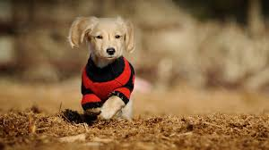 Dog Wallpapers Wallpapers Of Cute Dog 86