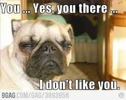 Funny Memes Animals - 10 funny animal memes laugh 4 humor