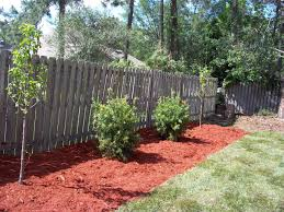pear trees bottlebrush sod and mulch best landscaping