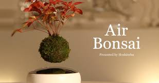 plant on desk coolest standing desk plants evodesk blog