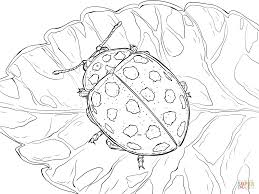 22 spot ladybird coloring page free printable coloring pages