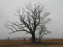 new jersey s tree