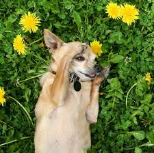 a list of plants that are poisonous to pets metro mutts blog