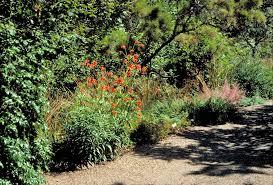 Berkeley Botanical Gardens Botanical Garden At Berkeley Planet Horticulture