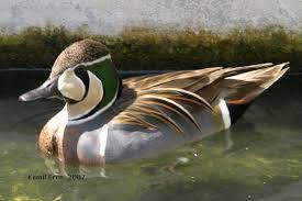 eron av ve süs hayvanlari çiftliği eron gamebirds and ornamental