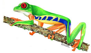 eyed tree frog drawing by blanchard