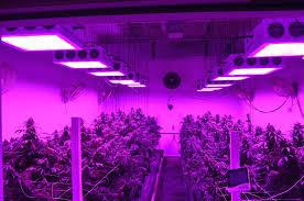 grow light bulbs lowes plant growing lights ing s home depot light bulbs lowes plants under