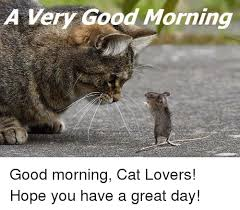 Good Morning Cat Meme - a very good morning good morning cat lovers hope you have a great
